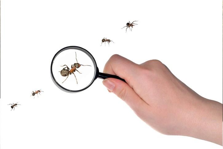 ant control bain pest control