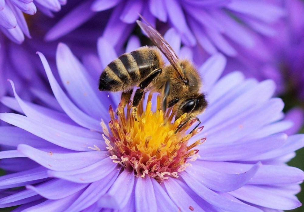 Pollinator Safe Pest Control